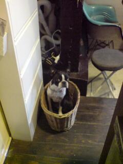 籠と犬と貸し切り