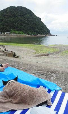 夏、海、犬